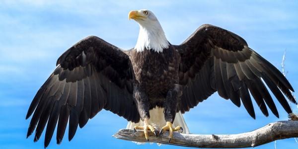 ¡Símbolos y enseñanzas del águila, un ejemplo de transformación!