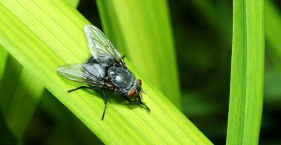 trampas de mosca