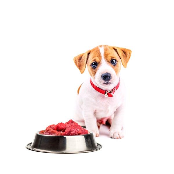 el perro come carne