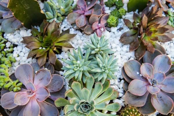 jardín suculento