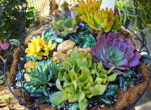 multiflora fernandopolis cactus suculentos cactus
