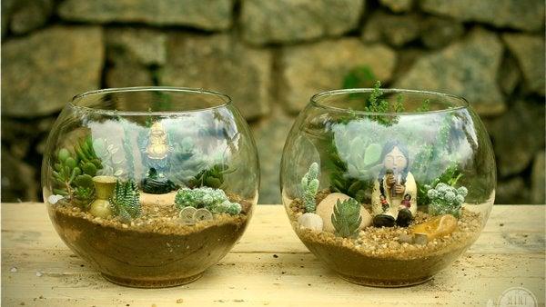 mini suculentas de jardín