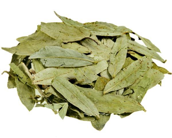 Senna Tea 2