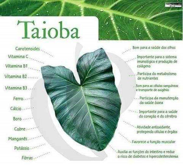 taioba 2