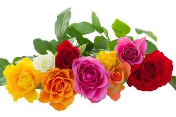 El significado espiritual de ROSE (todos los colores)