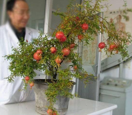 arboles de roma