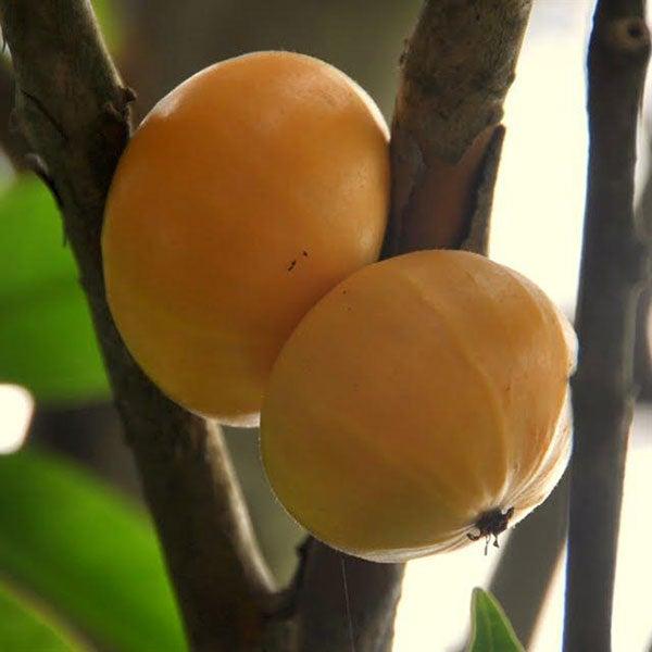 fruta de cambuca en el pie