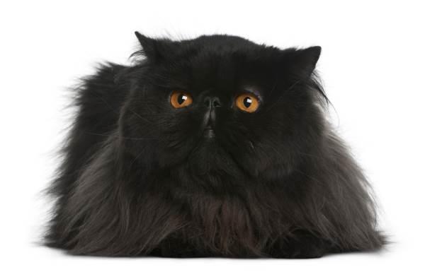 gato negro 6