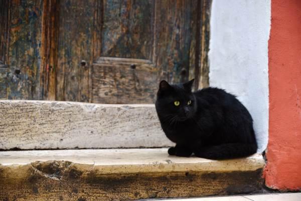 gato negro 7