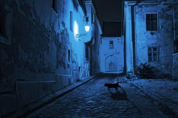 gato negro 8