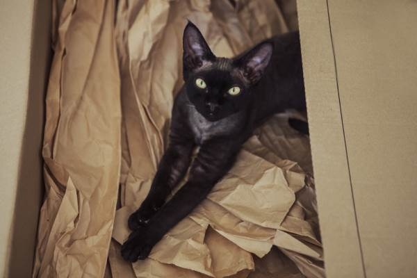 gato negro 5