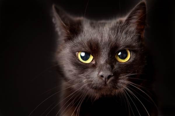 gato negro 10
