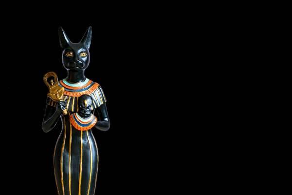 gato negro 9