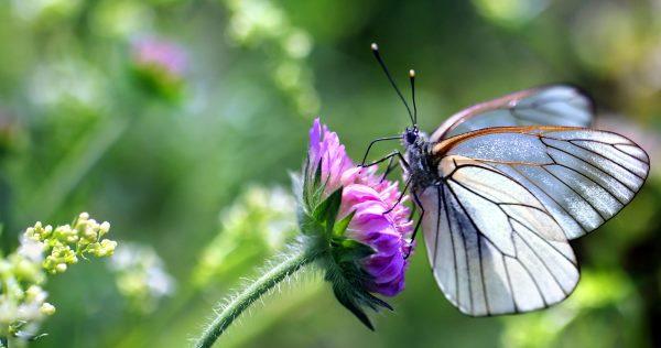 plantas de mariposas 2