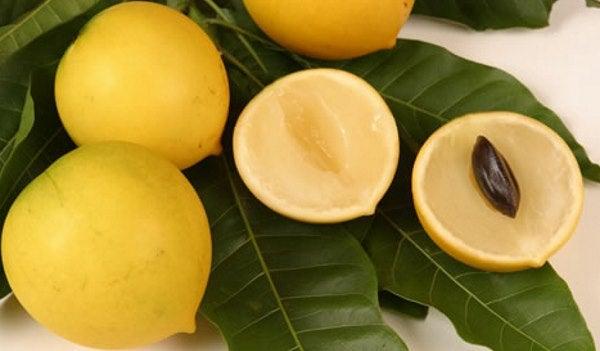 Abiu: fruta nativa MEDICINAL. Pero para que sirve?