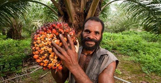 Aceite de palma: ¿por qué es perjudicial para la salud y el medio ambiente?