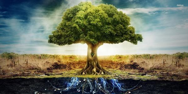 Árbol de la vida: significados celtas y bíblicos
