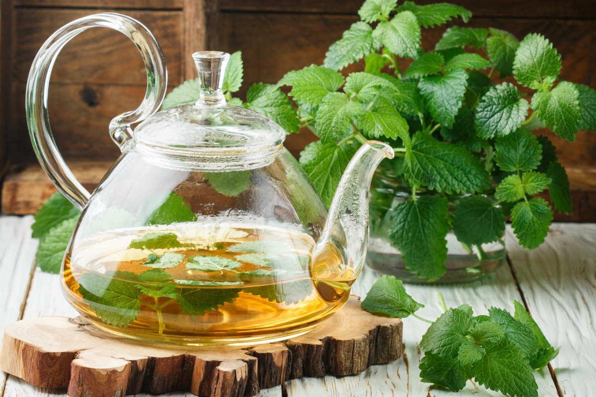 Bálsamo de limón: propiedades, beneficios y cómo hacer té.