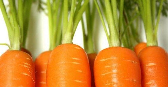 planta de zanahoria