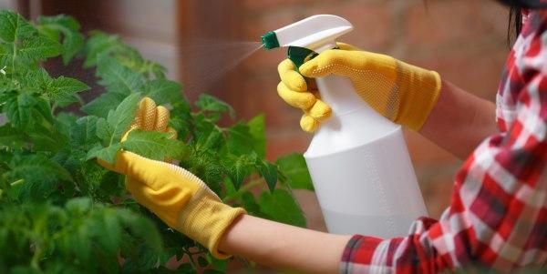 Cómo usar bicarbonato de sodio para prevenir hongos vegetales