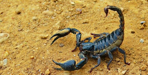 escorpião no sonho