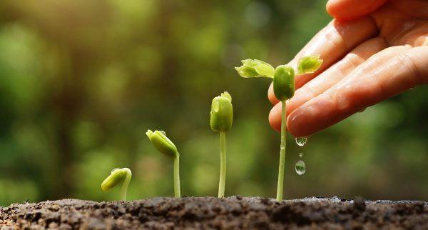Fertilizante orgánico: 9 formas naturales de fertilizar jardines y macetas