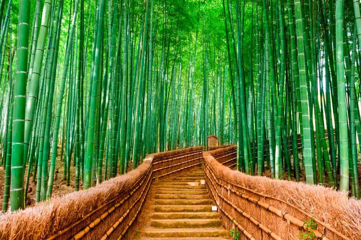 La historia japonesa del bambú que nos enseña a superar la adversidad de la vida