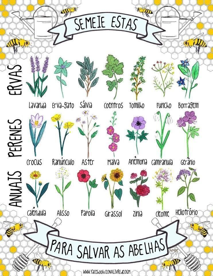 plantas de abejas