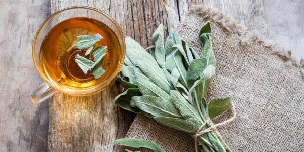Té Salvia → Los beneficios para su salud, contraindicaciones y cómo prepararse