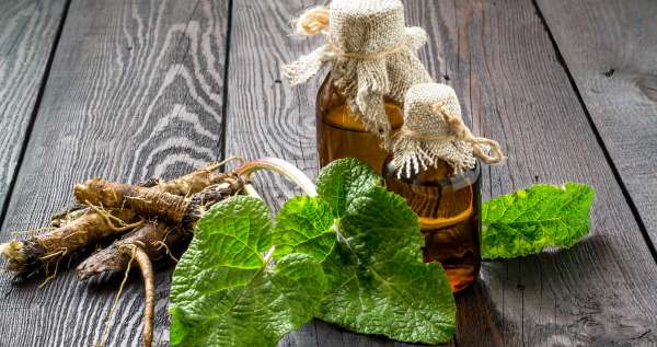Todo sobre la bardana: usos, beneficios, té, recetas y cómo plantar
